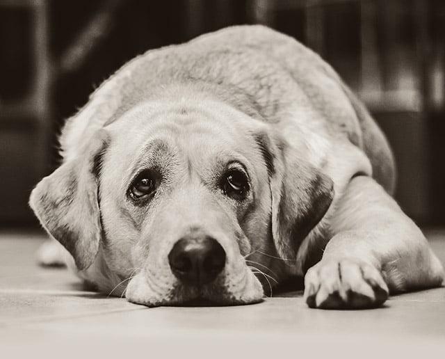 Swanage Jazz Festival 2019   Dog Policy